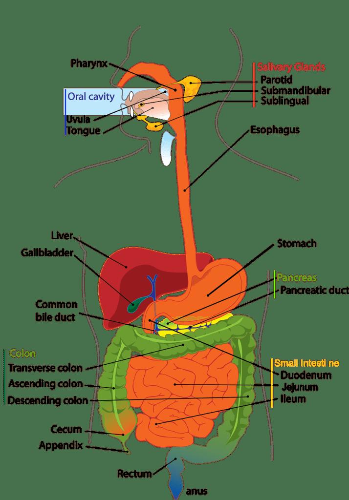 Description: Integration of Systems | Biology for Majors II