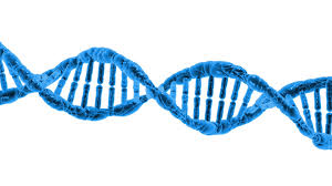 Dna Free Stock Photo - Public Domain Pictures